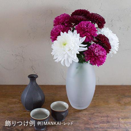 菊と酒 HanaVi -MANKAI-ホワイトグリーン系×三芳菊【純米吟醸】