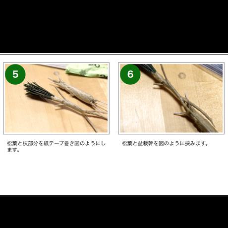 ~響~のリアルな『松葉』30本×3束入