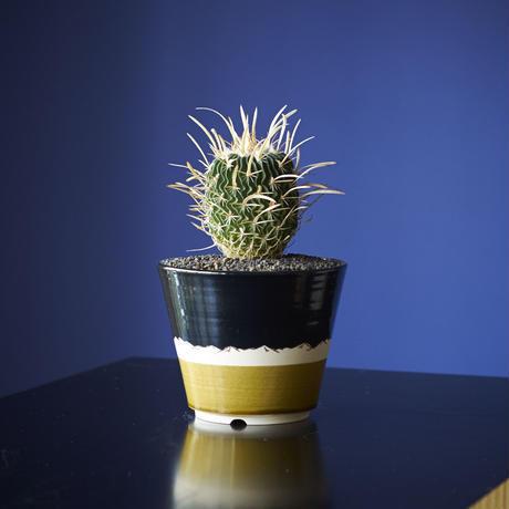噴水振武玉 × AMETSUCHI pot (S)