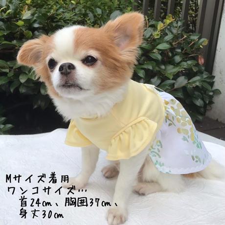 M・ワンコ服・シャインクール&フリル袖ワンピ(イエロー・Mサイズ)