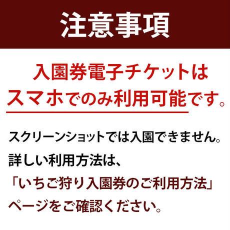 ☆数量限定☆いちご狩り入園券(4月5日~分) 小人(小学生) オンライン購入特典付き