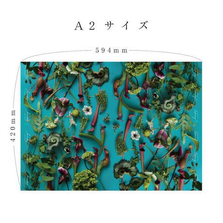 ハラペコラボの包装紙 - moe moe harapecolab peper 2018 summer blue- (3)