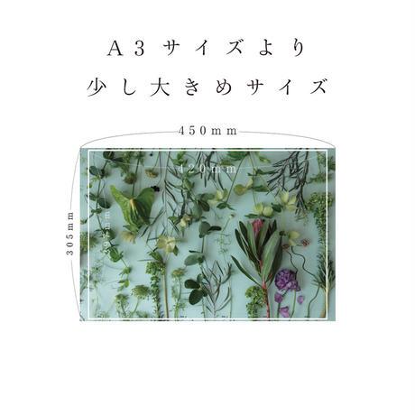 ハラペコラボの包装紙 -moe moe harapecolab peper 2018 natural green- (A)