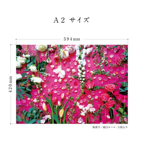 ハラペコラボの包装紙 -moe moe harapecolab peper 2021 spring sweet pink - (16)