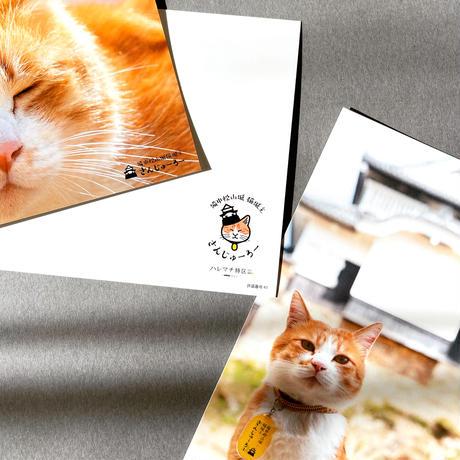 猫城主 さんじゅーろー ポストカード 5種セット