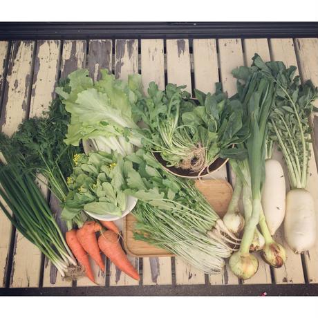 旬をいただくお野菜セットB(15点)