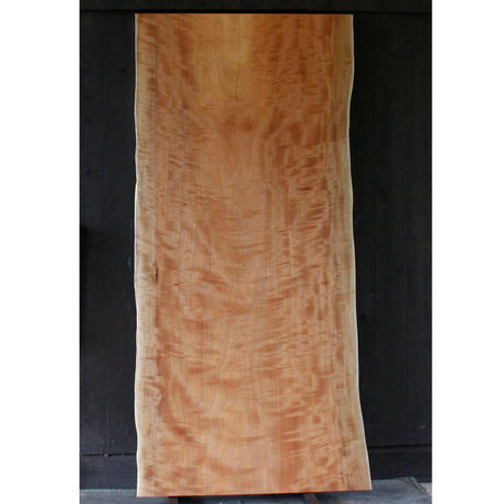 椨桜(タブザクラ)A010