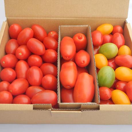 ほっとま(加熱調理用トマト 約1.8kg アソート)