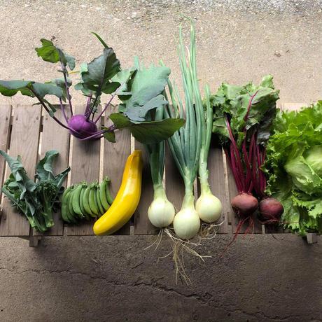自然栽培・旬の野菜セット (8~9品目)【定期便】※白菜が入る場合は7品目になります。
