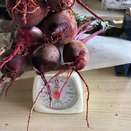 食べる輸血!自然栽培ビーツ2kg(10個から14個、葉っぱつき)