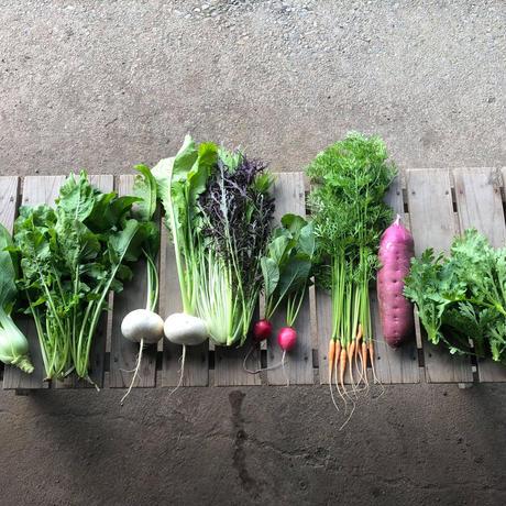 自然栽培・旬の野菜セット (6~7品目)【定期便】