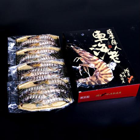 【送料込み】活き〆冷凍車海老(生食可:125g×4P)