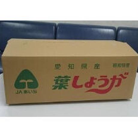 【愛知県碧南市産】へきなん葉しょうが 4㎏箱・1㎏袋×4袋入