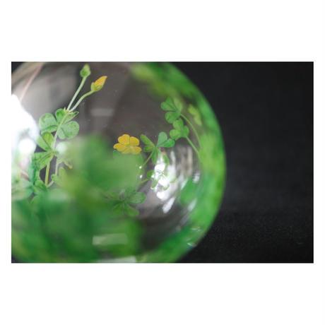 山崎葉 ガラス カタバミ 一輪挿し