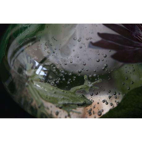 山崎葉 ガラス 香水瓶 睡蓮に蛙
