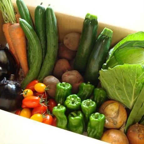 火曜日発送 クール便 旬の無農薬無化学肥料の小さい野菜セット