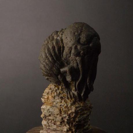 マンスリーGK2020年3月号【クトゥルフの化石】