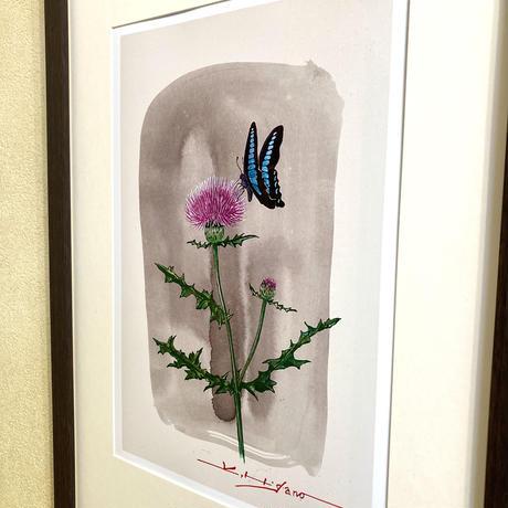「アザミと蝶」オリジナル・ジクレーアート