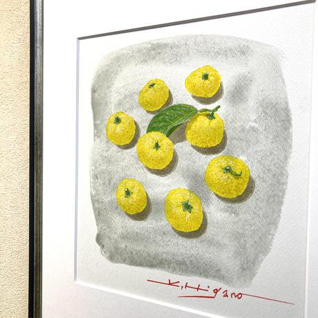 「八つの柚子」色紙にテンペラ画