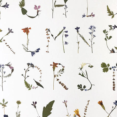 MR Studio London / Pressed Flower Alphabet Poster A2 - White