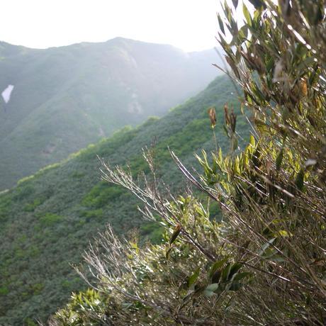 天然月山筍(800g)