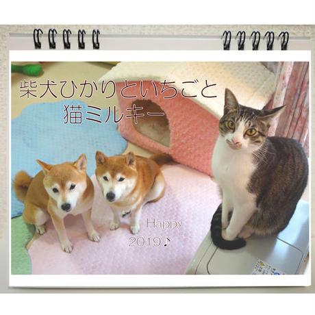 【送料無料】2019年  柴犬ひかりといちごと猫ミルキー 卓上カレンダー