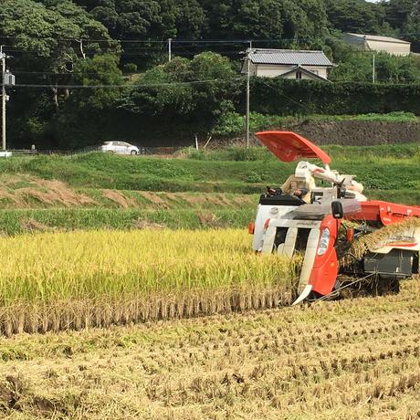 新米入荷!!【少量だから新鮮・便利な1kg】長崎県平戸の棚田米ひのひかり 1kg