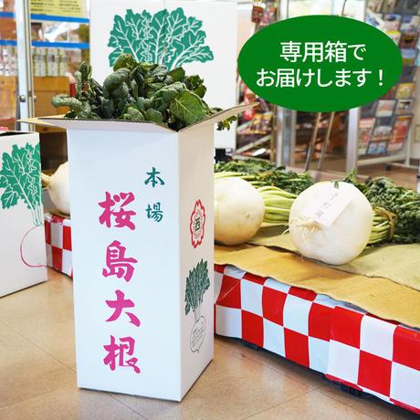 【送料無料】桜島大根  葉付き 8キロ前後 専用箱入り ゆうパック120サイズ