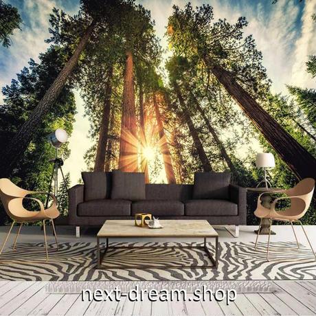 壁紙 自然 太陽 そびえ立つ木 青空 1ピース 1㎡ サイズカスタマイズ可能 部屋 ショップ 店舗 m06183
