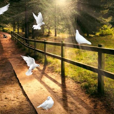 3D 遮光カーテン 203×213cm サイズ多数◎ 自然風景 農場 牧場 鳩 DIY おしゃれ 模様替 リビング 子供部屋 オフィス 店舗用  m01766