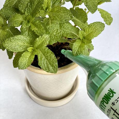 ハイポネックスキュート 観葉植物用