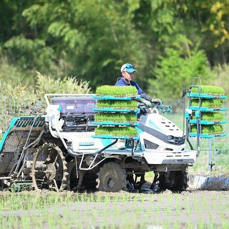 令和3年予約分【2021年新米:コシヒカリ】岐阜県産 農家直送 日吉高原がんばろ米 (5kg)|乾田直播で生産し、粘土質土壌にて特殊栽培