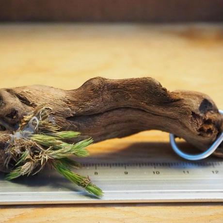 チランジア / ブリオイデス (T.bryoides ) *A02/Ju14