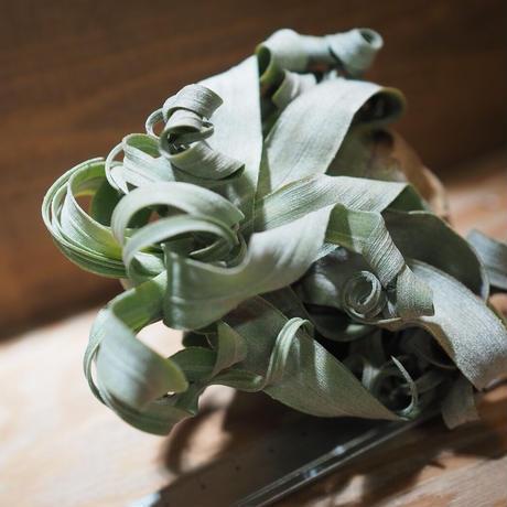 チランジア / ストレプトフィラ XLサイズ (T.streptophylla) *A01/Jan27-01