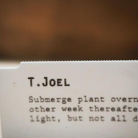 チランジア / ジョエル (T.'Joel') *A02/Mar08
