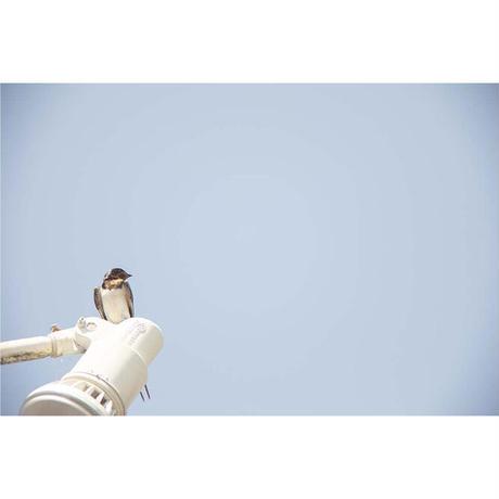 <写真集>Des oiseaux (On birds) / 川内倫子、ギレム・ルザッフル