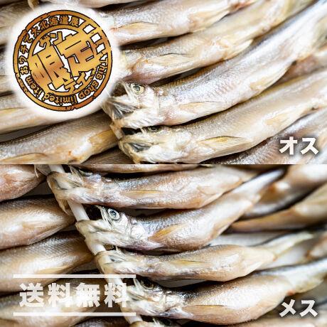 【今が旬】カネシメ食品 通販「ししゃも オスメス食べ比べセット」《送料無料》(※沖縄、離島除く)