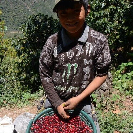 (メール便対応400gまで)グアテマラ リモナール農園 100g 中煎り