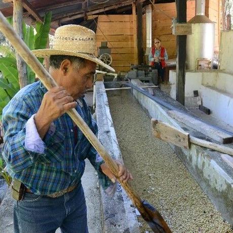グアテマラ リモナール農園 100g 中煎り