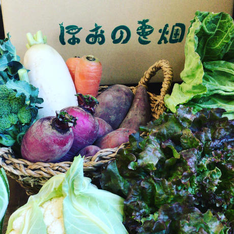 お野菜セットM(送料込クール代加算)定期便_隔週