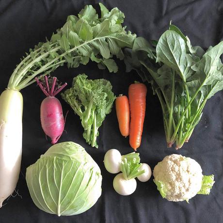 お野菜セットS(送料込クール代加算)定期便_隔週