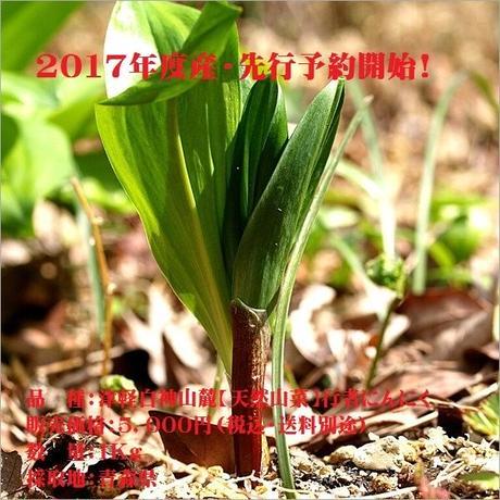 津軽白神山麓【天然山菜】行者にんにく/1Kg:2017年度産・先行予約開始(期間限定販売)