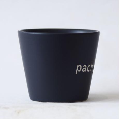 ネームポット 'pachypodium' M