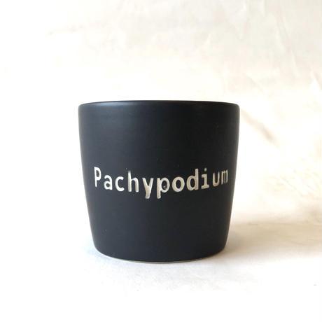ネームポット 'Pachypodium' S