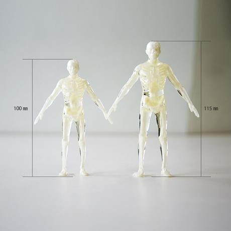 スケルトン人体模型(11.5㎝)