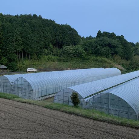 やしろ農園 椿メロン 3-5玉入り