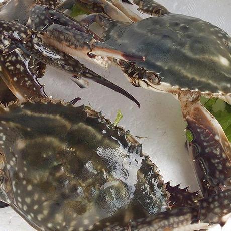 伊勢湾産 渡り蟹(ガザミ)のトマトソース