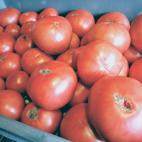 伊賀産オーガニックトマトのポモドーロ(1人前)
