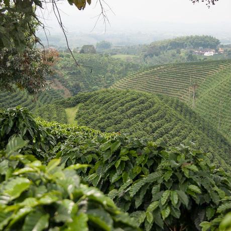 【Do well by doing  good.投票】  テーマ②教育 トウモロコシでコーヒー農家の食卓を支えよう!