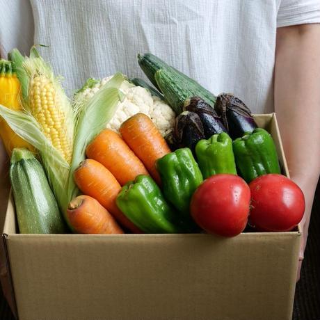 朝採れ夏野菜便